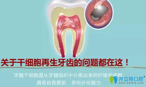 再生牙齿真的假的?2020年日本再生牙能临床吗