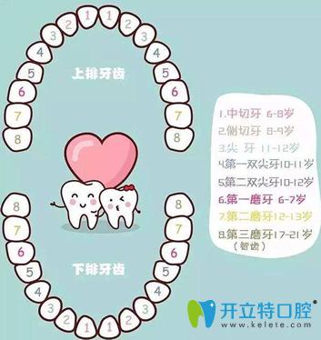 拉斐尔口腔专家解析人有多少颗牙齿及牙齿缺失的影响