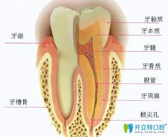 牙槽骨萎缩还能恢复吗