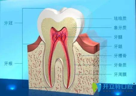 什么是牙槽骨