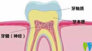 牙齿结构组织示意图
