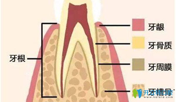 口腔内部情况分解图