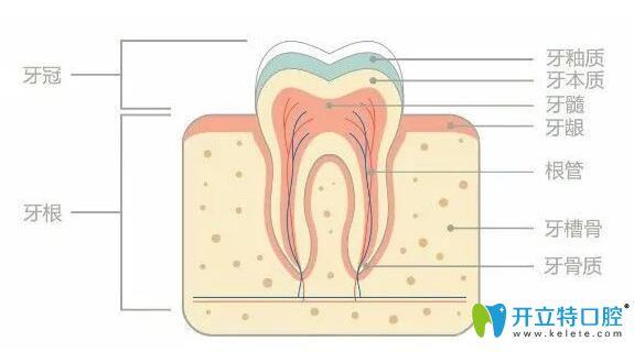 正畸中邻面去釉对牙齿有危害吗