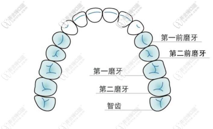 牙齿的位置