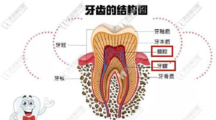 开髓引流术牙神经不在了?不信你看这牙齿开髓引流步骤图